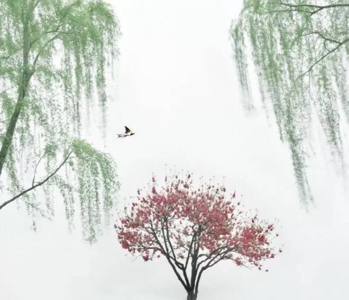 章台柳·寄柳氏 韩翃